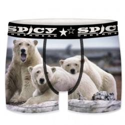 Boxer Spicy Ours blanc
